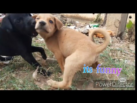 Little cute puppies playing with each other
