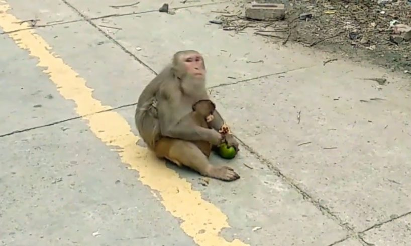 Monkeys with their babies  playing & eating || baby monkeys cute animals