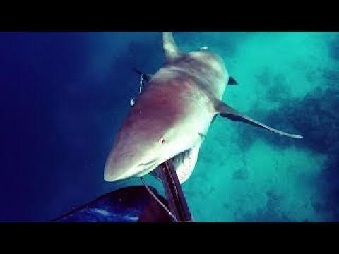 NEAR DEATH CAPTURED by GoPro and camera pt.53 - You Wouldn't Believe I Creepy Crevette
