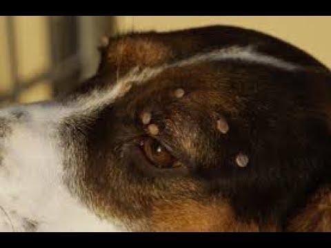 OUROBOROS animal Rescue remove Ticks from poor puppy 2020 brick model building