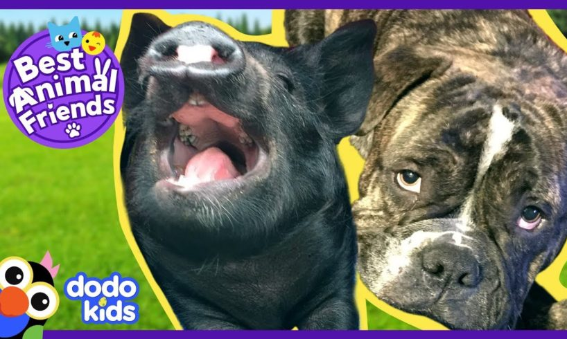 Oskar the Dad Dog Raises Cutest Baby Pig | Animal Videos For Kids | Dodo Kids: Best Animal Friends