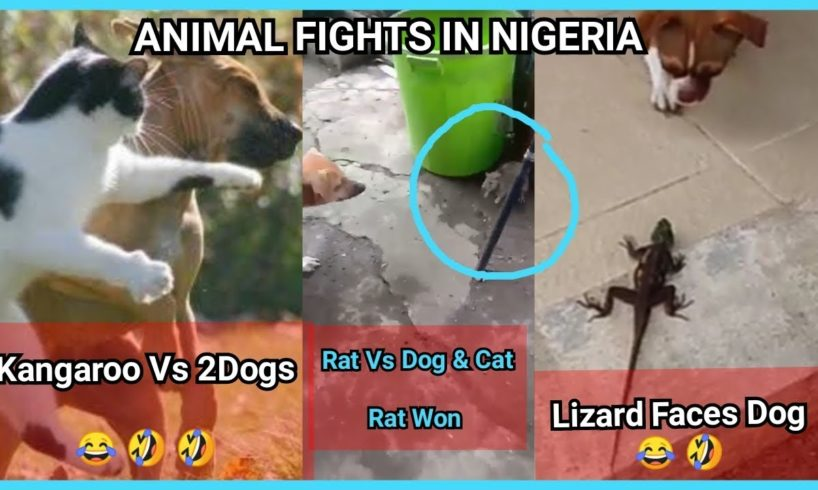 Part 1: Funny Animal F!ght Video Compilation In Nigeria