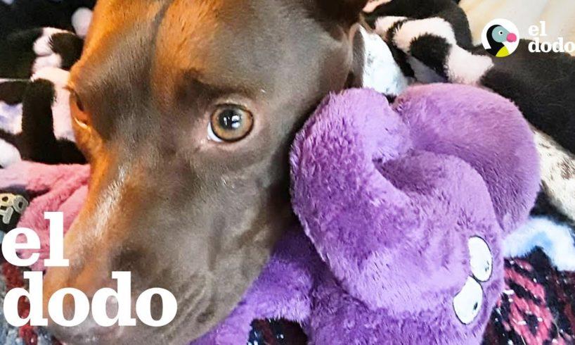 Perra rescatada aprende a ser una cachorra de nuevo | El Dodo