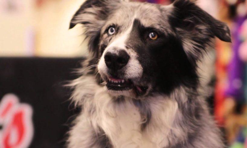Pet Adoption - TV Commercial