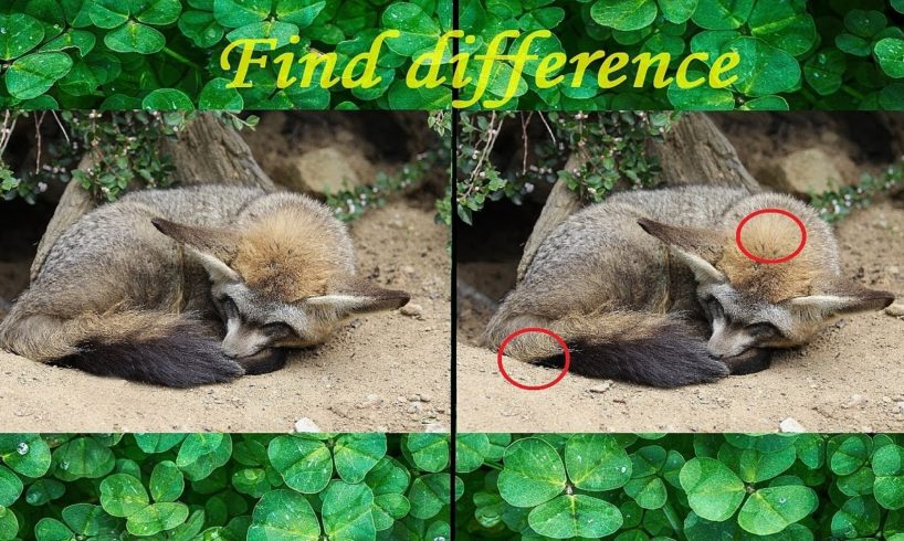 Play with Ivy: FIND DIFFERENCE (Animals)