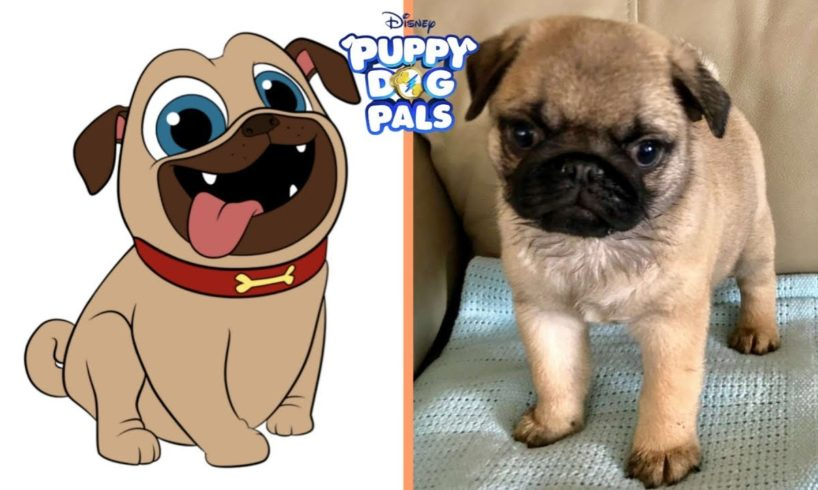 Puppy Dog Pals Characters In Real Life | Cute Puppies