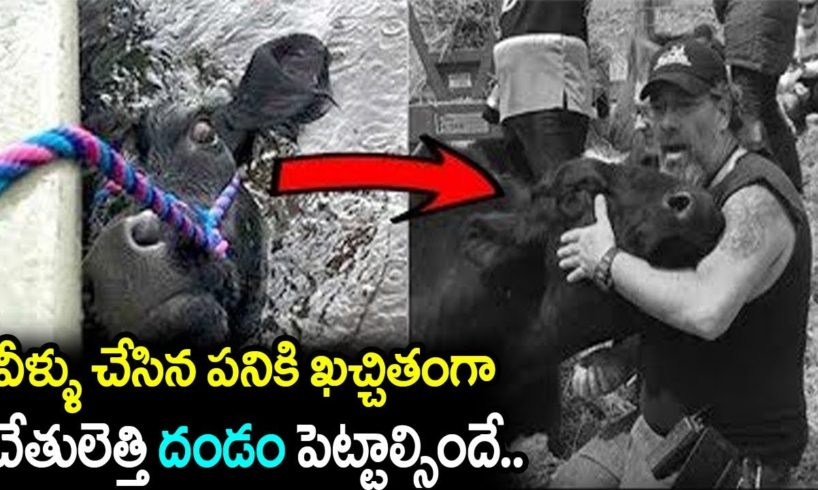 Real Life Heros || 5 Most Inspiring Animal Rescues || We Support You