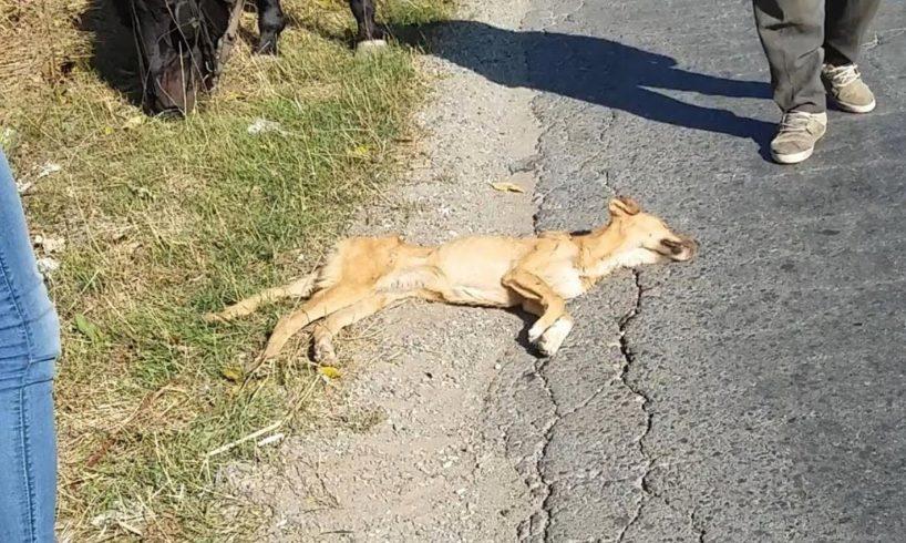 Rescue Abandoned Dog Only Bones & Skins Dying of starvation