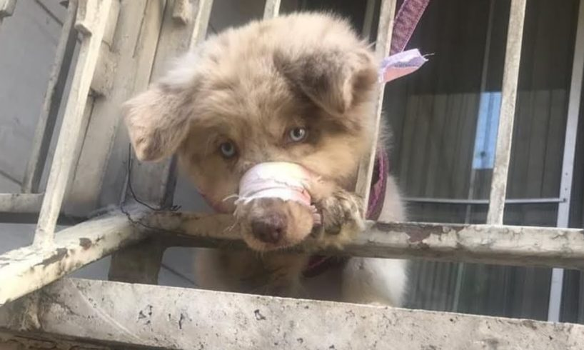 Rescue Little Puppy With His Mouth Tied and Was Chained On The Balcony - An Animal Abuse.