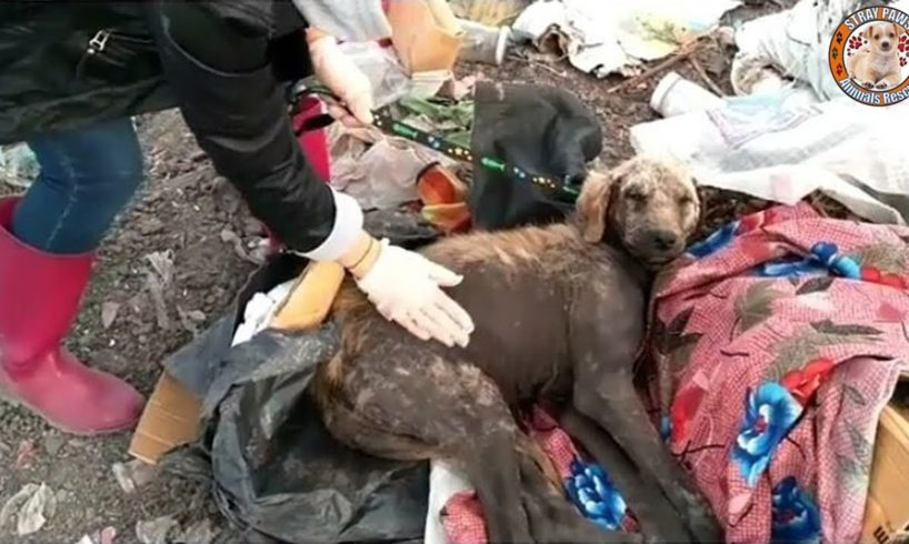 Rescue Poor Dog Was Abandoned In Landfills Make You Cann't Hold Tears