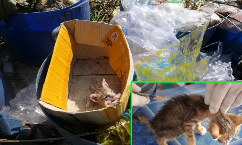 Rescue Poor Skinny Kitten Which Throw In The Waste Bin By Inhuman | Abandoned Little Kitten