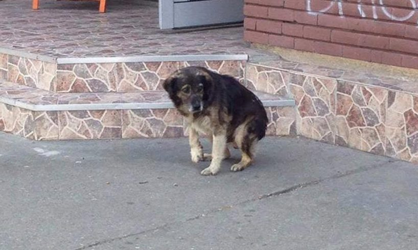 Rescue Stray Dog Broken Leg in barbaric Way by Monters People on Street |  Hearbreaking