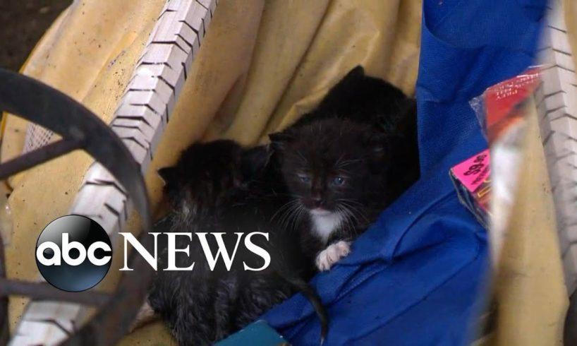 Rescue efforts underway for animals after Hurricane Michael