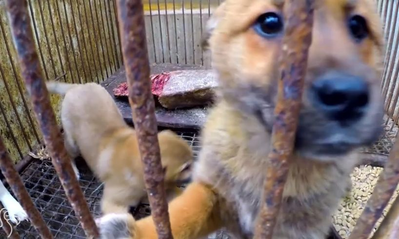 Rescued Dogs Feel Grass For The First Time