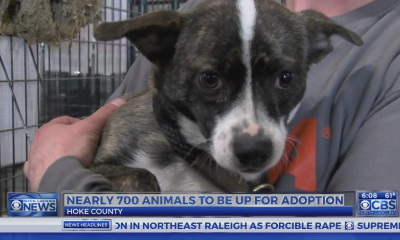 Rescued animals from Hoke Co. soon to be ready to adopt