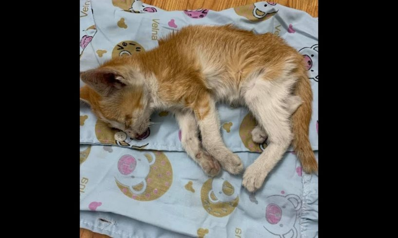 Rescued kittens abandoned at the road edge, very weak and thin   Animal rescue