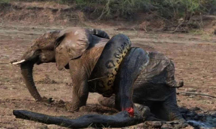 Snake Vs Bull Elephant Python Vs Elephant Lion Attacks Animal Fight Back Nature Wildlife