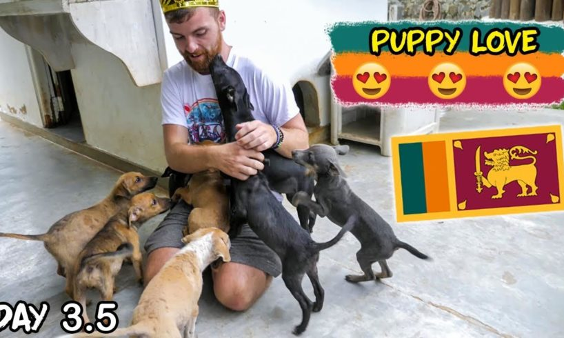 Sri Lanka Tuktuk Tournament Day 3.5 | Cute Puppies Edition