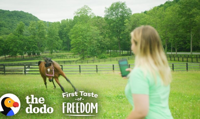 Starving Horse Becomes So Gorgeous And HAPPY    The Dodo First Taste Of Freedom