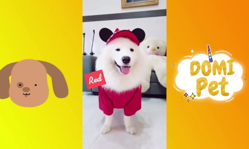 The Funniest and Cutest Samoye Dogs And Puppies Compilation #6