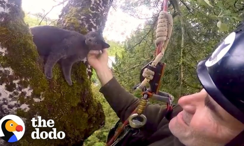 Thousands of Cats are Rescued from Trees by Climbers   The Dodo