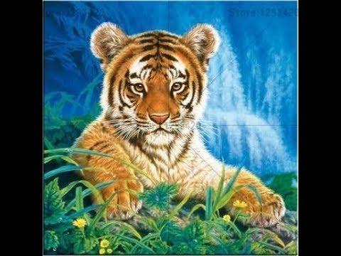 Tiger full life story in Hindi | Animal Planet Hindi |