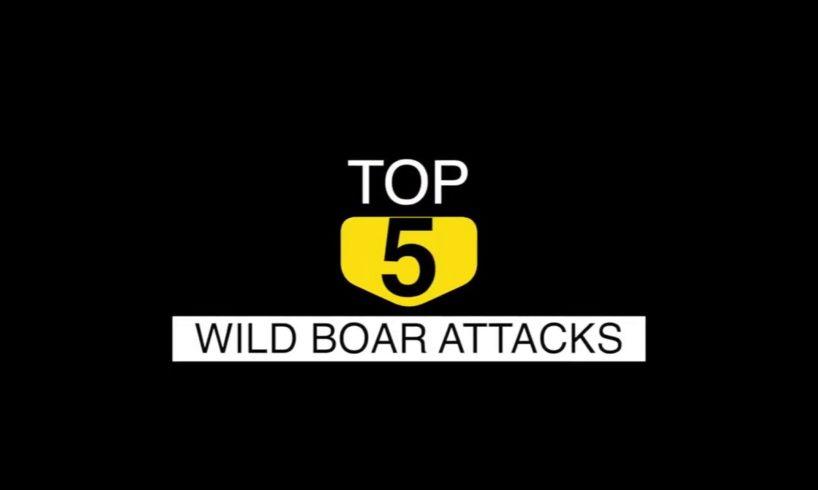 Top 5 Animal Attacks