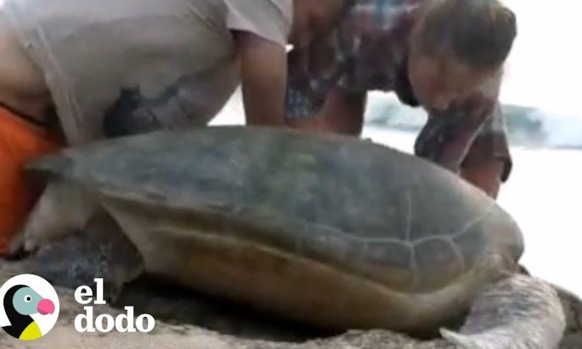 Un rescate casi imposible de una tortuga marina   El Dodo