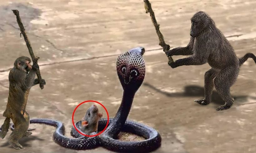 Unbelievable Monkey Save Mouse From Snake Hunting | Top Snake vs Prey