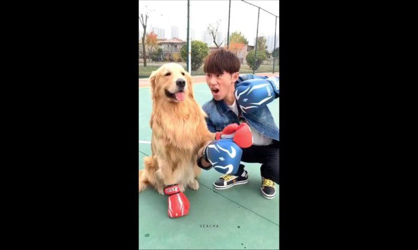 Veacha-Dog vs man fight