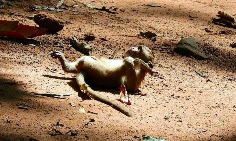 WHy?? Terrify Monkey, Baby monkey play happy,Wild Animala