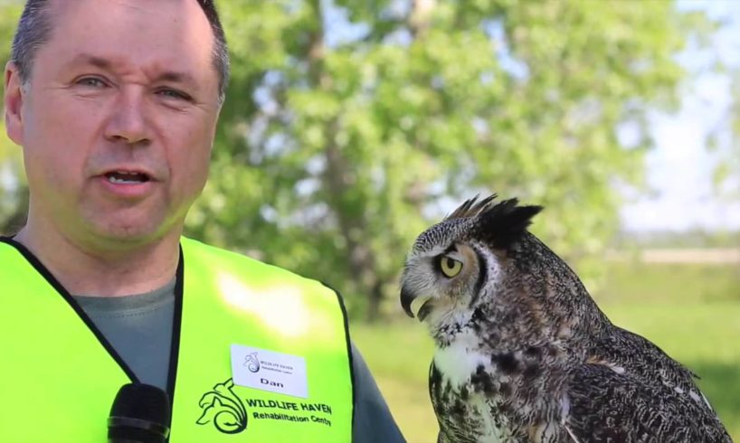 Wildlife Haven leasing new home for rescued animals from TransCanada