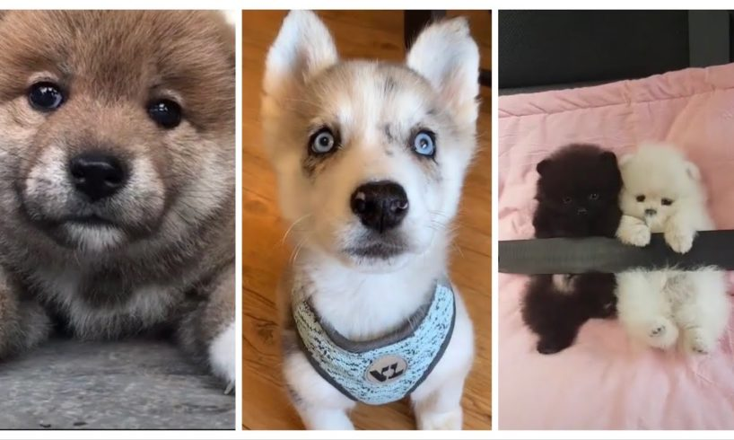 You've Got To See All These Cute Puppies!!! ???
