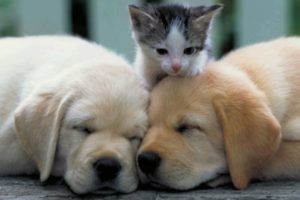 Cutest Puppies And Kittens In The World - Cute Dogs And Cats Doing Funny Things 2020 | Puppies TV