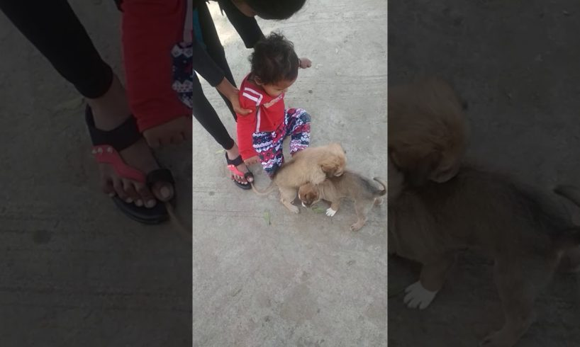 Priyal Baby Playing With Cute Puppies 🐩🐕