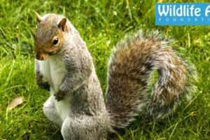 Squirrel terrorizes old lady... Funny Animal Rescue