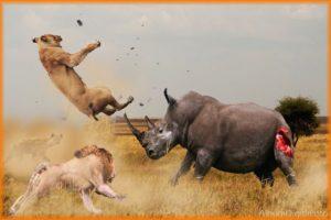 15 CRAZIEST Animal Fights Caught On Camera   Crocodile-Elephant-Leopard-Zebra-Rhyno-Eagle-Cobra