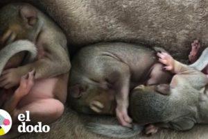 5 ardillitas son rescatadas de un tornado | El Dodo