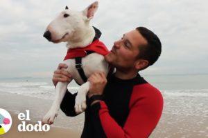 5 cosas que aprendes viajando con tu perro | El Dodo