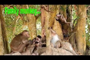 A lot of cute baby monkey playing around big tree with they mom.
