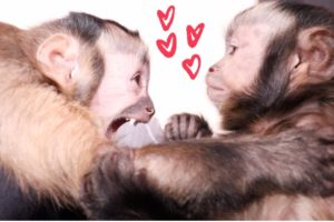 Cute Monkeys Playing & Talking!