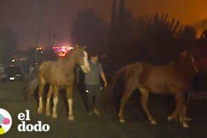 El increíble trabajo de rescatar animales de un fuego forestal | El Dodo