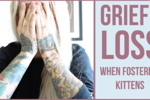 Grieving the Loss of a Foster Kitten (6 Tips)