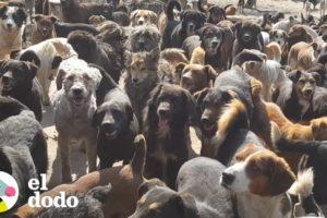 Hombre adopta a 750 perros sin pensarlo | El Dodo
