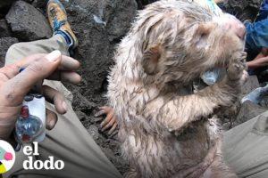 Perritos quedan atascados bajo rocas por 24 horas | El Dodo