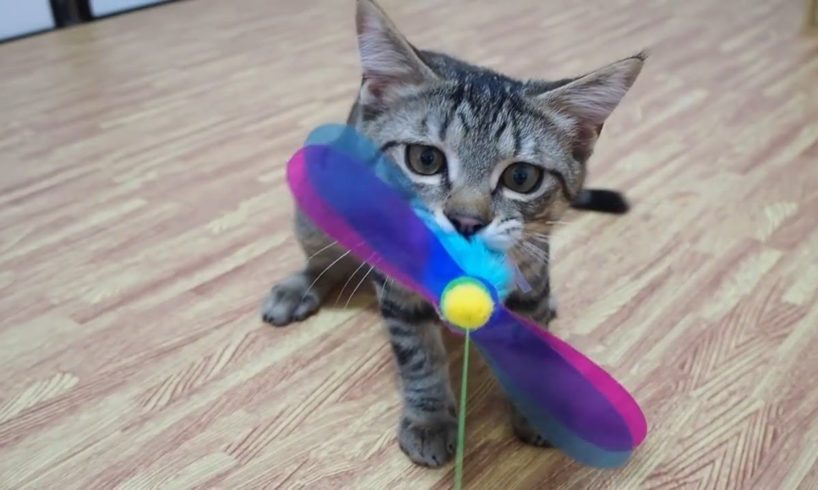 Super Cute Kittens Playing With Toys 2020