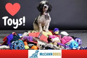 Teach Your Dog To LOVE Playing With Toys And How To Tug - Professional Dog Training Tips