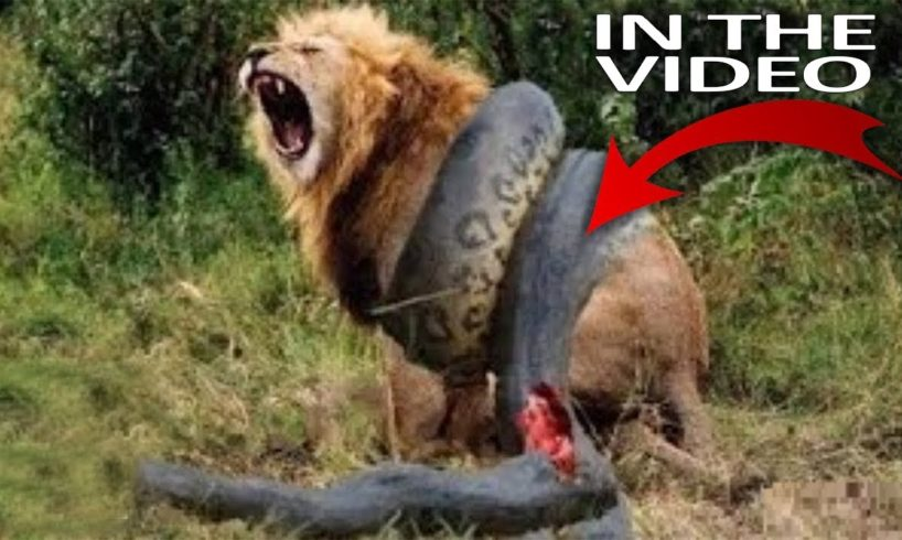 Top 11 Craziest Animal Fights Caught On Camera
