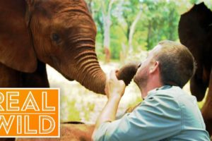Welcome To The World Of Extraordinary Animals! | Real Wild Documentary