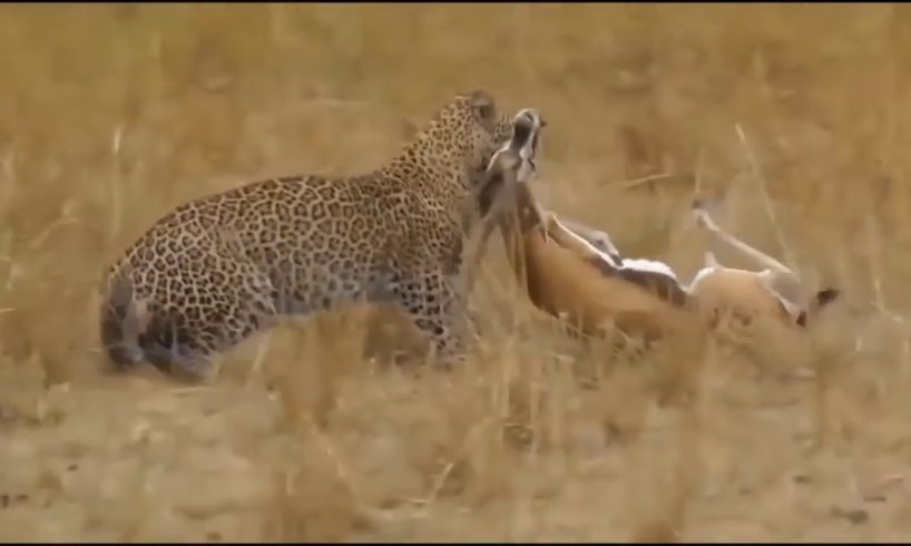 Wild Animals Documentary 2019 Fights Caught On Camera Fight Powerful Lion vs Crocodil